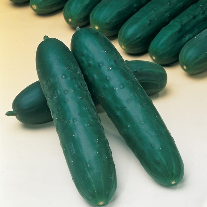 Grafted Cucumber Jazzer_LOW.jpg